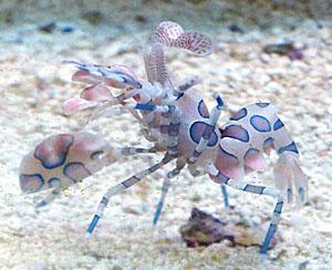 Aquarium Diseases And Pests Saltwater Aquarium Guide On Sea And Sky
