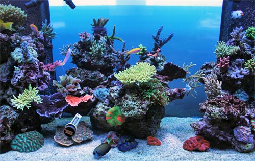 Beautiful saltwater aquarium images Beautiful aquariums for home