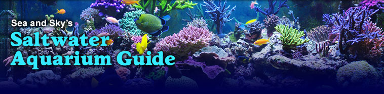 Title graphic for Sea and Sky's Saltwater Aquarium Guide