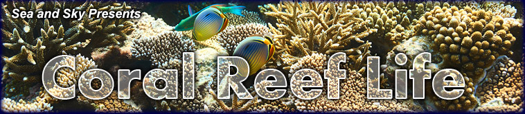 Title graphic for Sea and Sky's Coral Reef Life pages