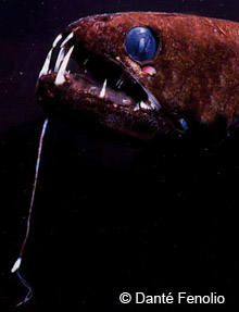 deep sea dragonfish - deep sea creatures on sea and sky, Reel Combo