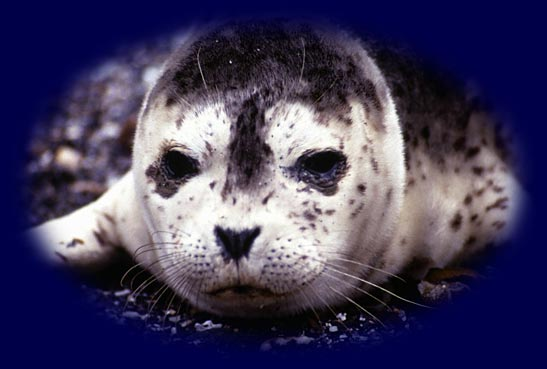 Ocean Conservation Quotes Famous Sea Quotes On Sea And Sky