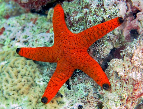 indian sea star sea gallery on sea and sky