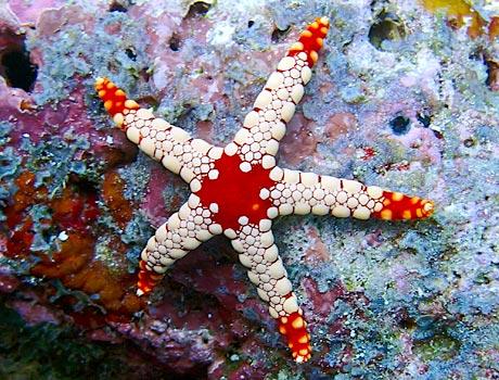 elegant sea star sea gallery on sea and sky