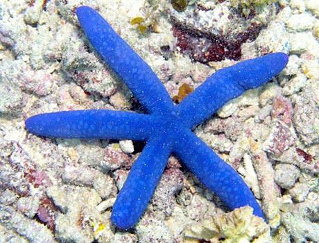 blue sea star sea gallery on sea and sky