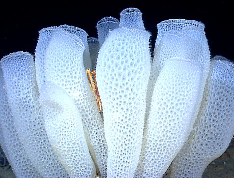 deep sea sponges sea gallery on sea and sky