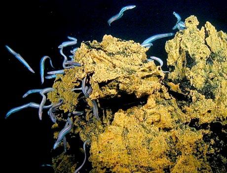 Swarm Of Eels Sea Gallery On Sea And Sky